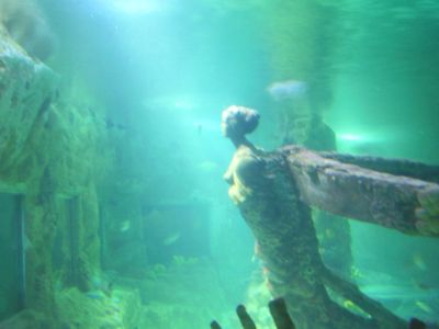 Brighton Sea Life underwater tunnel